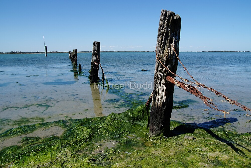 Coorong fence. by Michael Buddle