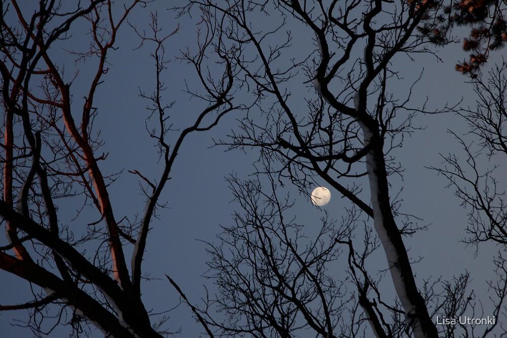 lost moon by Lisa Utronki
