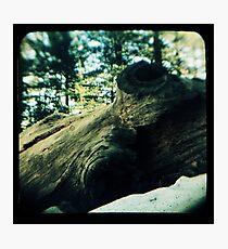 Ttv: Fallen Photographic Print
