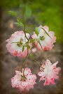 Spotted Rose by Elaine Teague