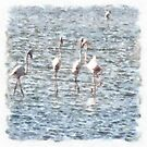 A Flamboyant Pat Of Flamingos by taiche