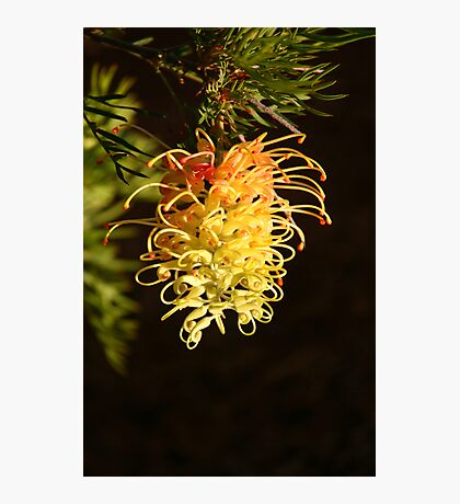 Golden Beauty Photographic Print