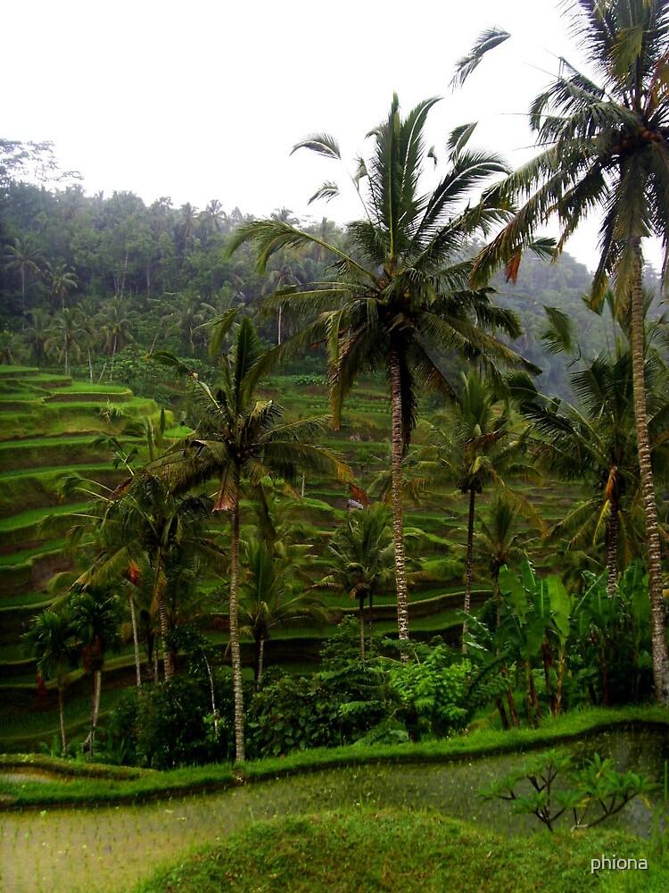 Evergreen Bali by phiona
