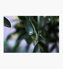 Lluvia Photographic Print