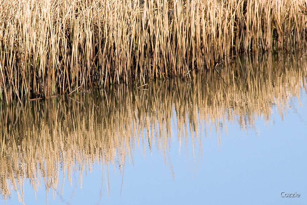 Reed Reflections by Pete Costick