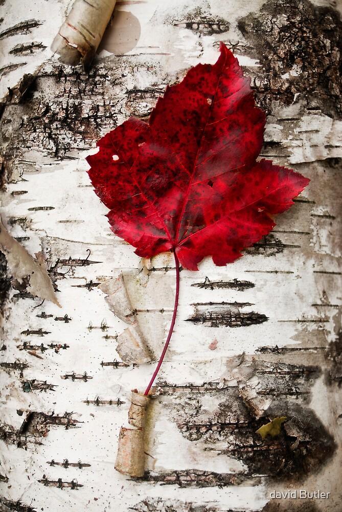 Leaf3 by david Butler