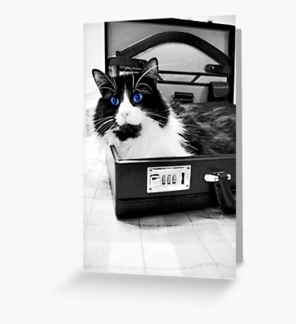 Cat at the Office Greeting Card