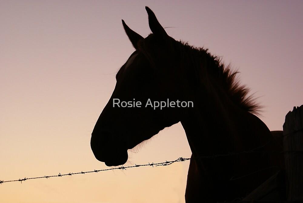 Sunset horse by Rosie Appleton