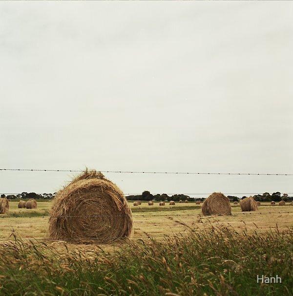 Hay Bayles_1 by Hanh