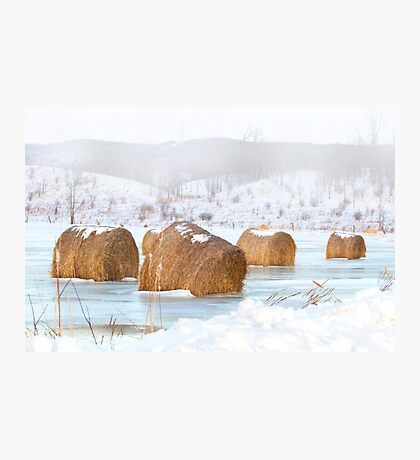 Ice, Fog n' Hay Photographic Print