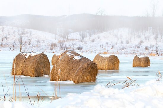 Frosted Wheat by Jim Cumming