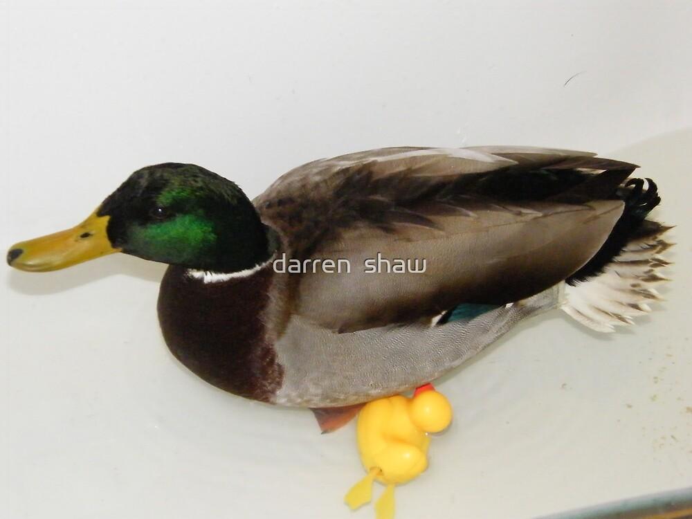 duck by darren  shaw