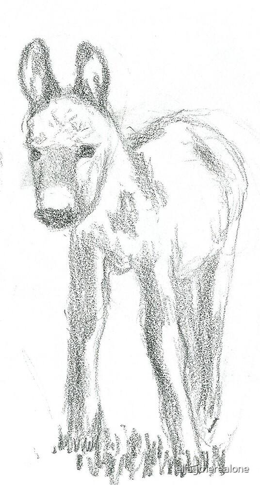 Donkey by eljaytherealone