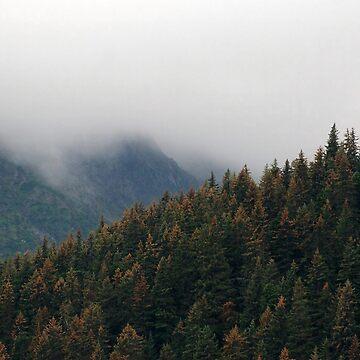 Alaskan Trees by jetpackpaul