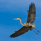 Great Blue Heron 3 by Marvin Collins