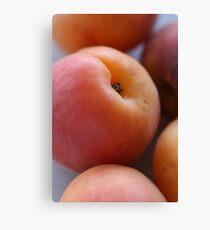 Apricot Canvas Print