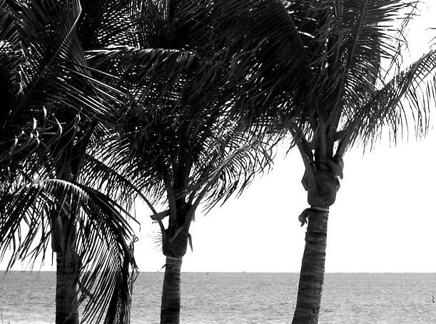 Breeze In the Palms by David W Kirk
