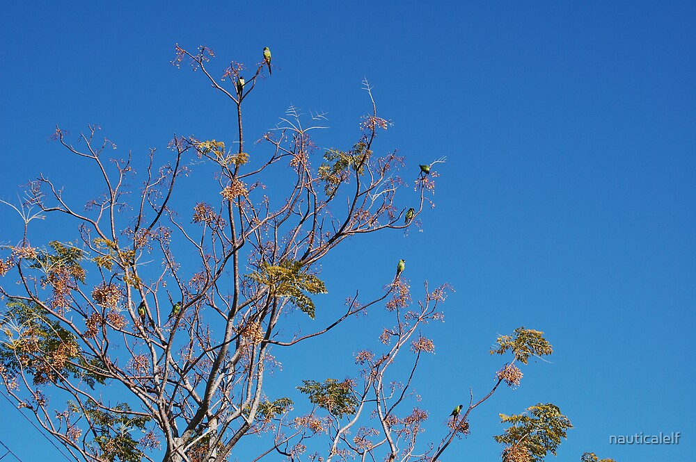 Counting Parakeets by nauticalelf