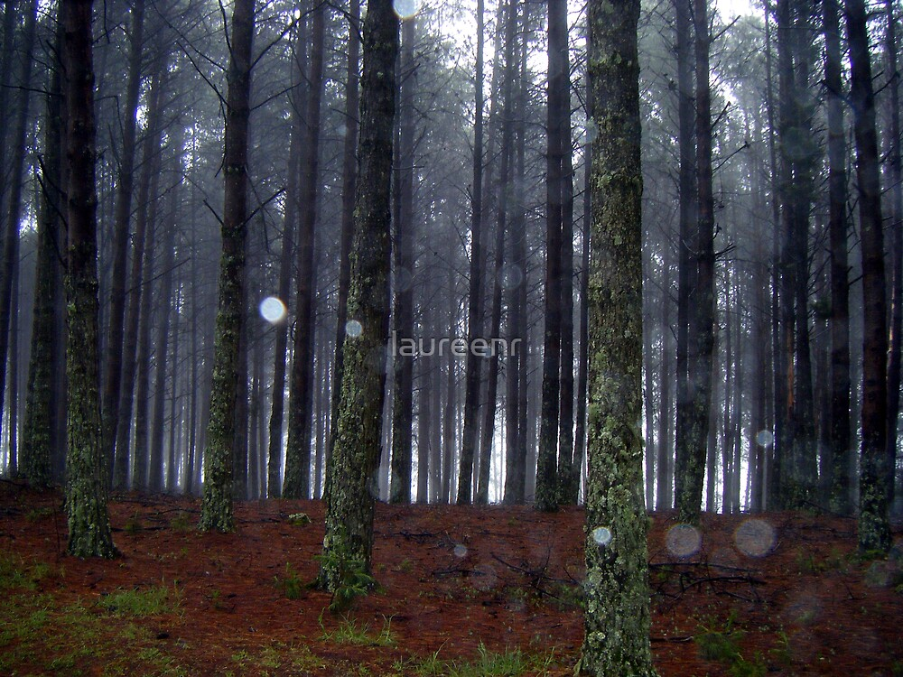 Misty Forest by laureenr
