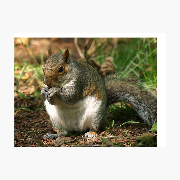 I`m Nuts About You!! Photographic Print