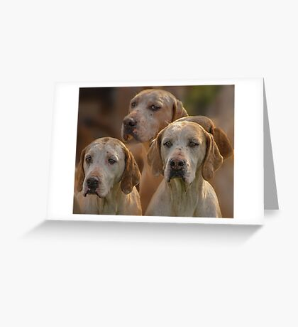 Fox Hounds (1) Greeting Card