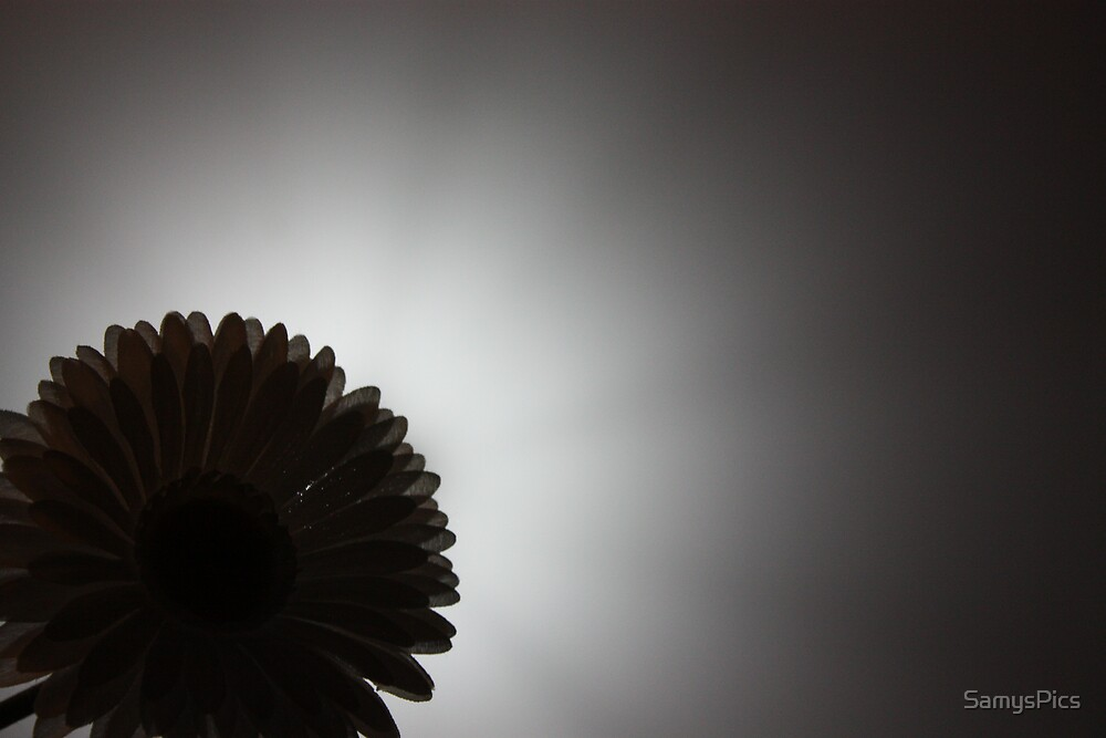 Flower Shadow by SamysPics