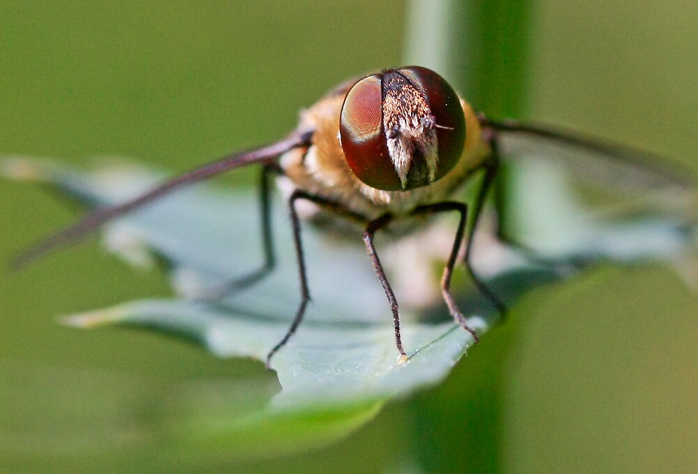 """The Fly  """"welcome to summer"""" by Selina Tour"""