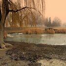 Weeping Willow by Cricket Jones