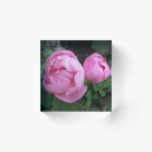 Constance Spry Acrylic Block