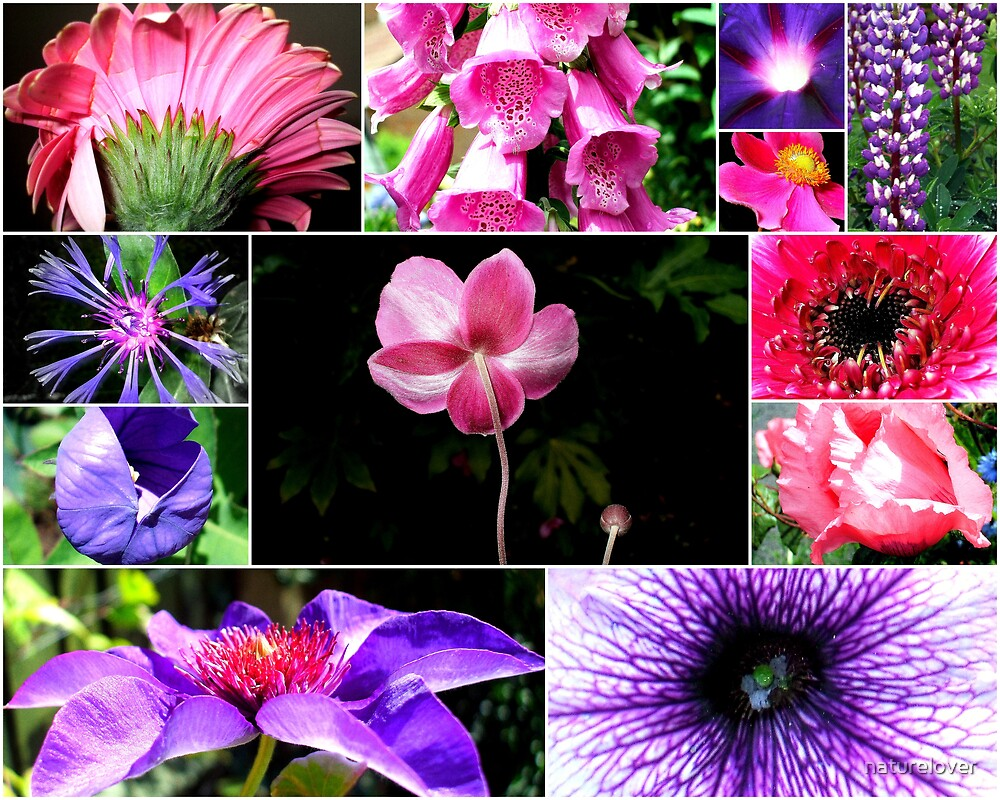 Purples and Pinks by naturelover