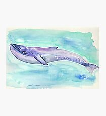 Lámina fotográfica Blue whale