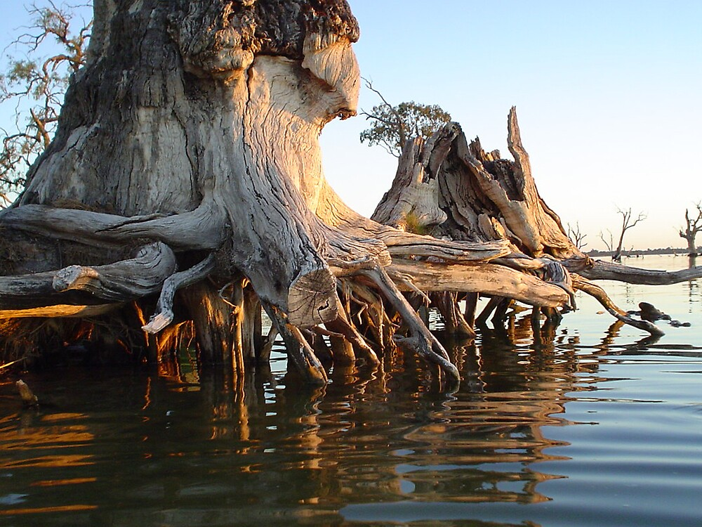 stump in the shallows by mia77