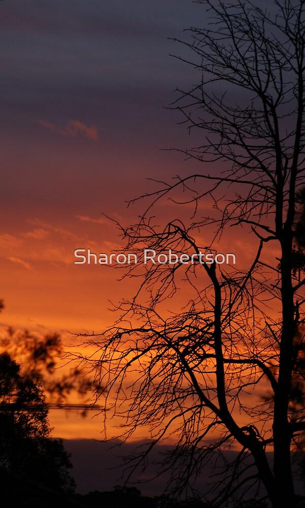 Sunset Beauty by Sharon Robertson