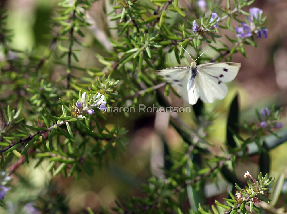 Fly Home Butterfly... by Sharon Robertson