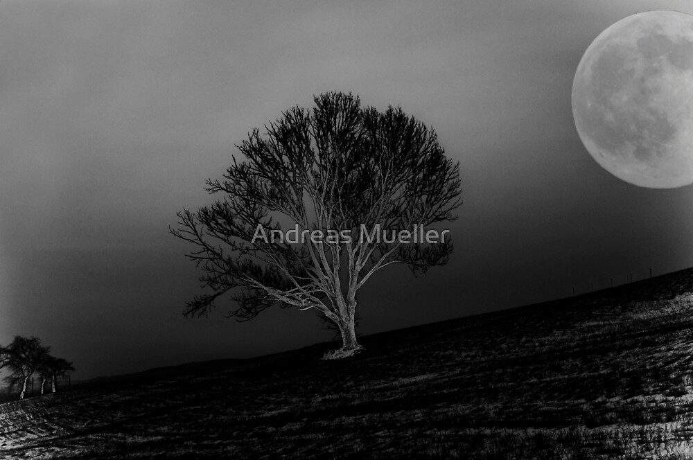 Winter Moonrise  by Andreas Mueller