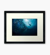 Schooling Jacks and Diver Framed Print