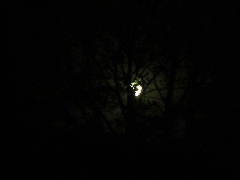 tree-lurking moon by welshgal1986
