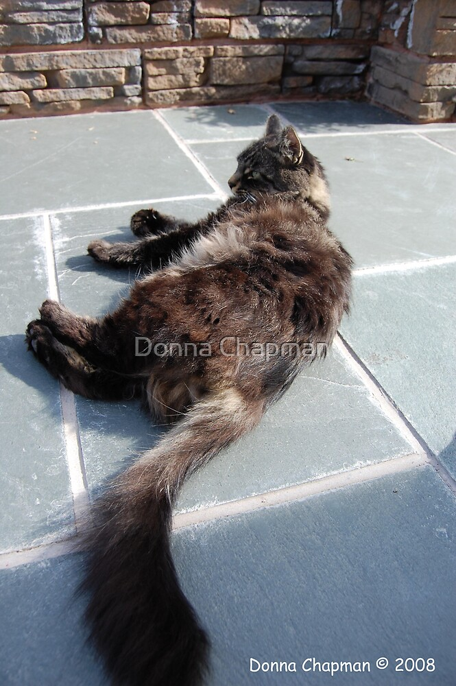 Cat by Donna Chapman