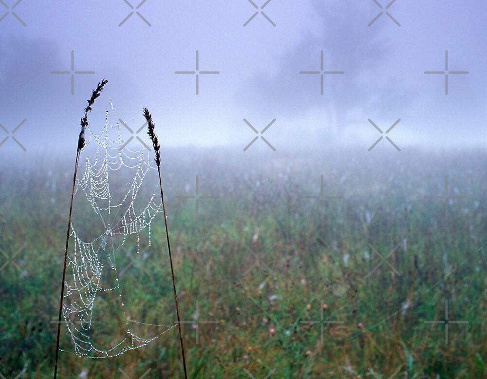 Dew Soaked Web by Bill Spengler