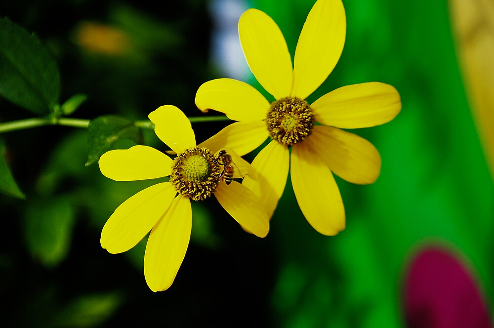 The Yellow Bee by otiswilson