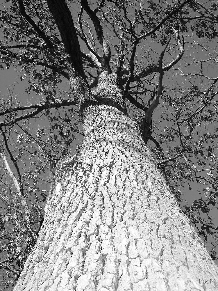 Big Tree by lroof