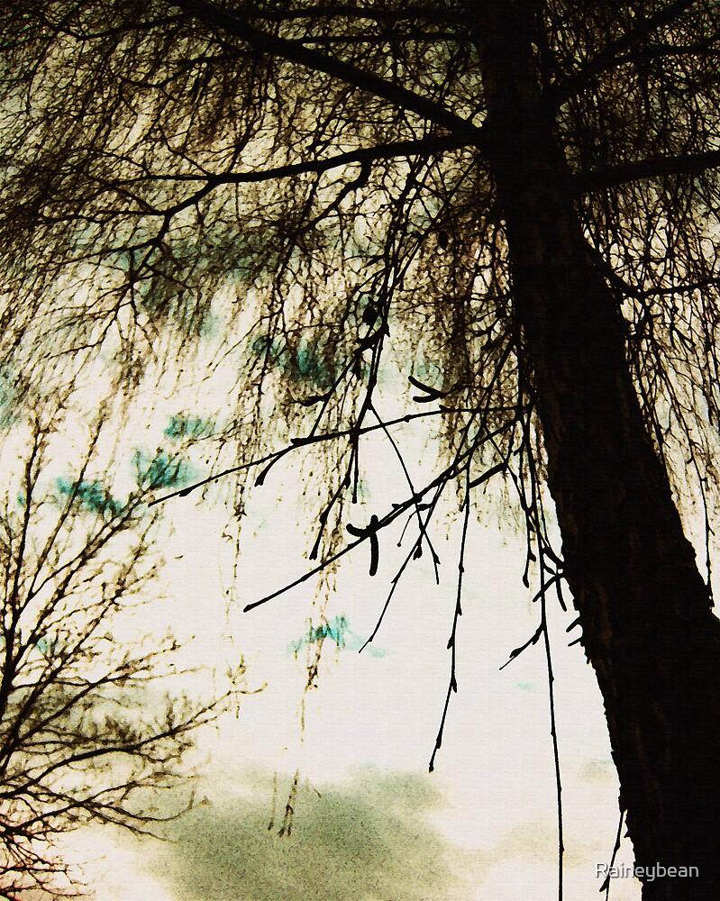 Trees by Raineybean