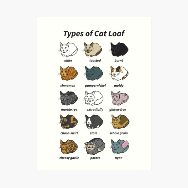 The Types of Cat Loaf Art Print