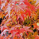 """Last Of The Fall Colors"" by Lynn Bawden"
