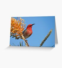 Beauty In A little Package Greeting Card