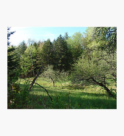 The Apple Orchard  Photographic Print