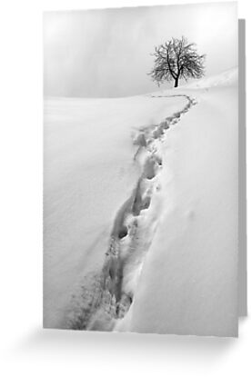 steps in the snow by ARGO