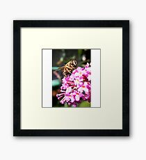 Happy Smiling bumblee bee :)  Framed Print