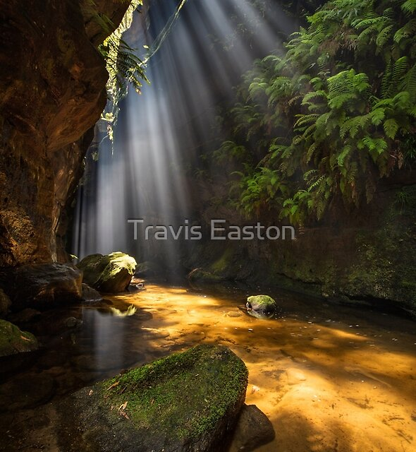 Blue Mountains Canyon by Travis Easton