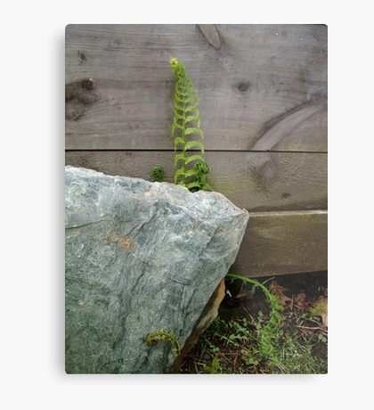 Fern and Rock Metal Print